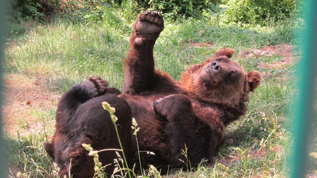 Auf wiedersehen im Bärenpark