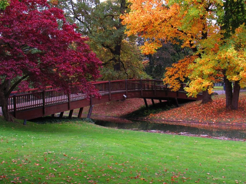 Brücke im Stadtgarten