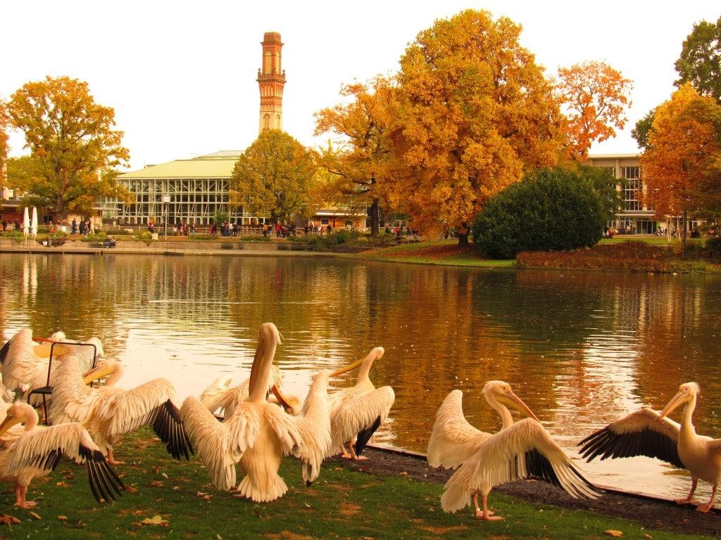 Pelikane und Tropenhaus